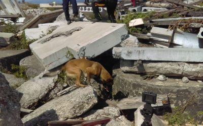 Entrenamiento de Guías y Perros de Búsqueda y Rescate: Guías más seguros y perros más confiables